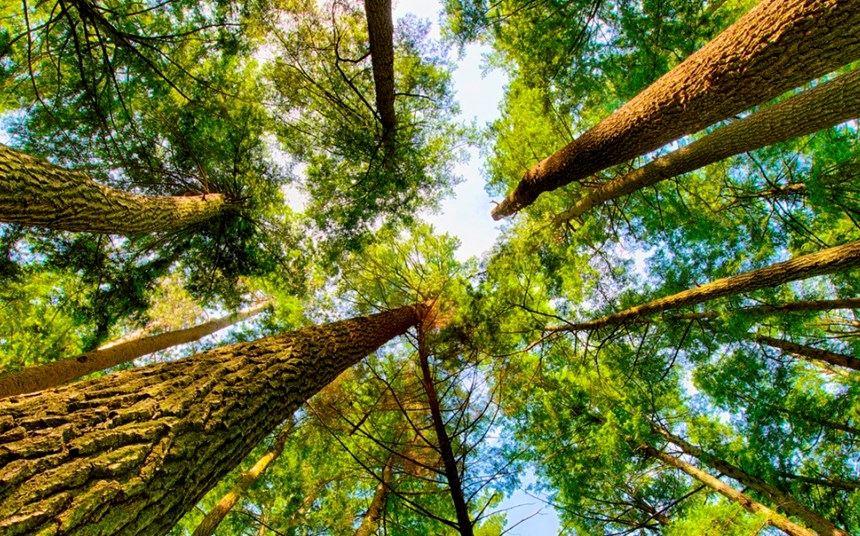 How the Neste board leads on sustainability
