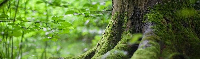 environment-forest-tree-banner.jpg
